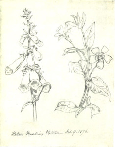 beatrix potter sketches