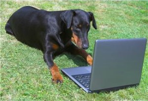 Your dog learning how to code.